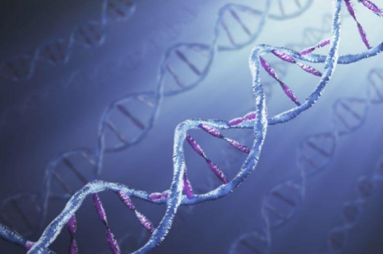 Молекулярное строение гена