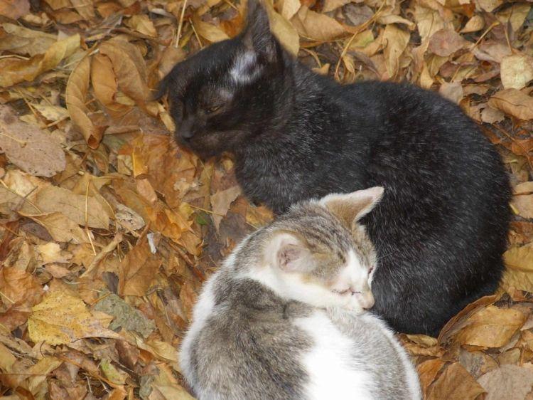 Чернобыльские коты