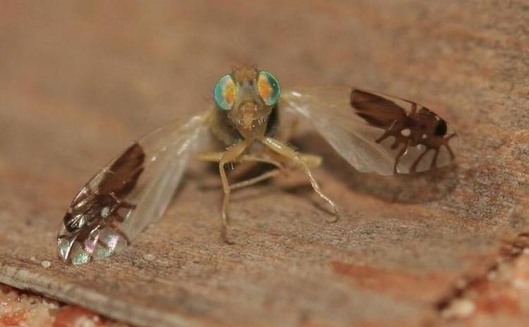 Три мухи в одной