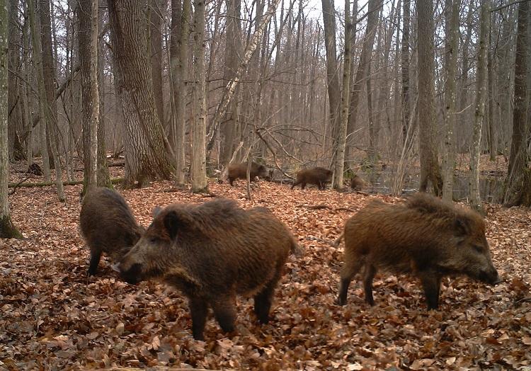 Животные в Рыжем лесу