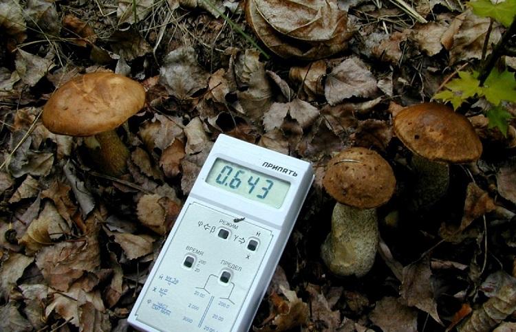 Уровень радиации в Рыжем лесу