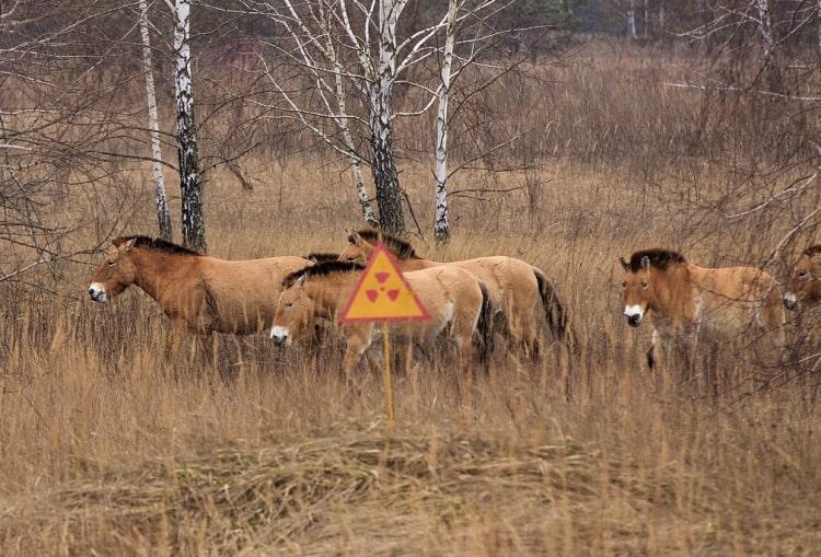 Животный мир Чернобыля после катастрофы