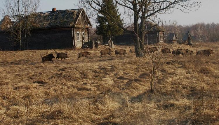 Выжженая радиацией местность в Чернобыле