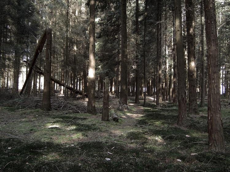 Скачать Лес Торрент - фото 8