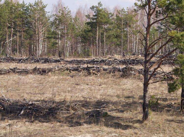 Рыжий лес в Припяти