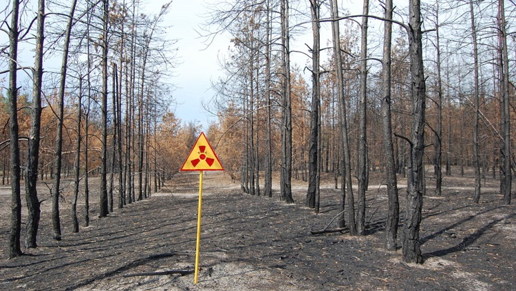 Чернобыль до и после, радиация в Рыжем лесу