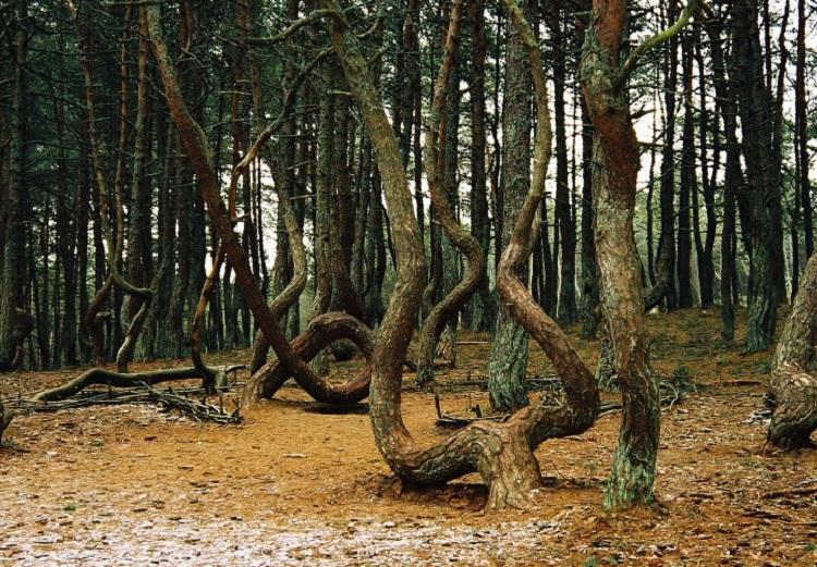 Радиоактивный Рыжий лес