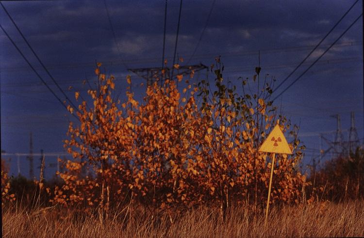 Радиактивный Рыжий лес