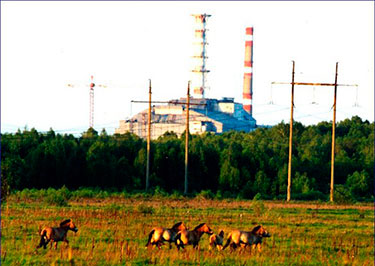 Animals in Chernobyl