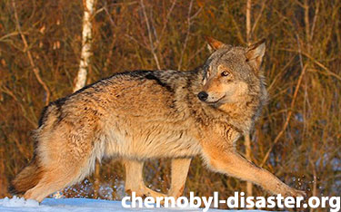 Animals of Chernobyl