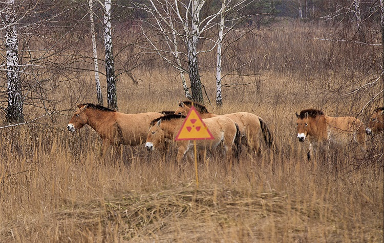animals_chernobyl12