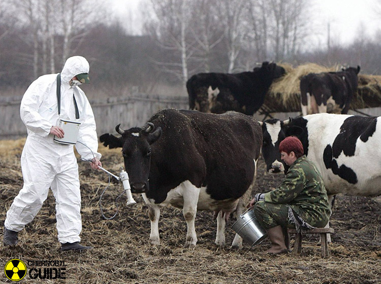 chernobyl disaster pictures animals