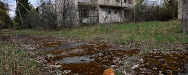 Compilation pf pictures of Chernobyl