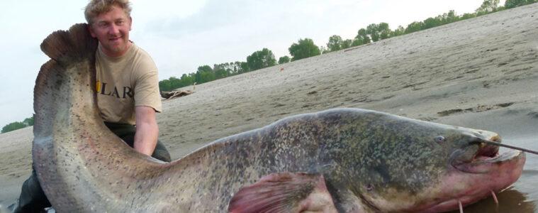 chernobyl giant catfish