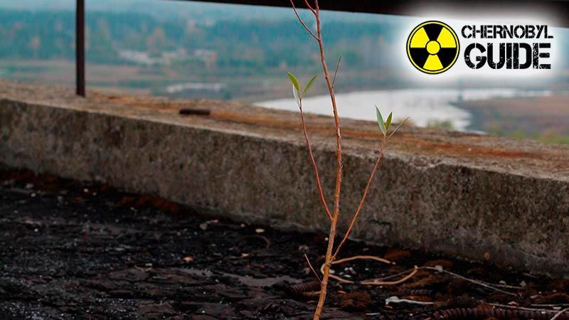chernobyl diaries photos