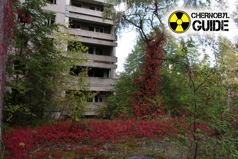 Unique photos from the city of Pripyat in Chernobyl